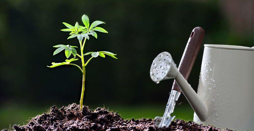 1. Tipp für Taufgeschenke: ein Baum als Sinnbild für Wachstum und Zukunft