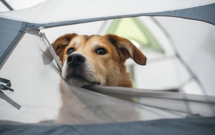 Campingplätze sind ebenfalls ein tolles Reiseziel mit dem Hund. (Foto: shutterstock - Pawle)